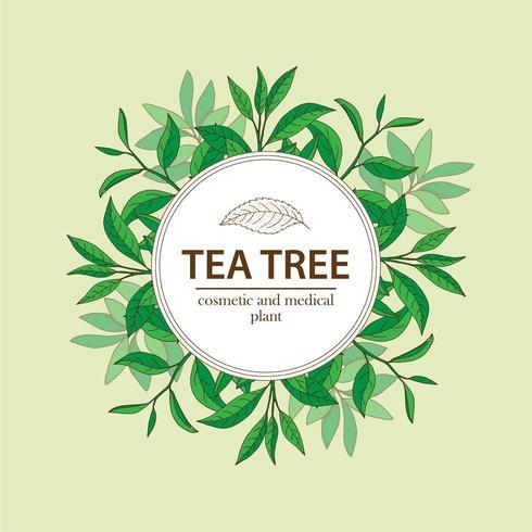 Plantes d'arbre à thé sous cadre de cercle blanc. Fond à base de plantes dessiné à la main.