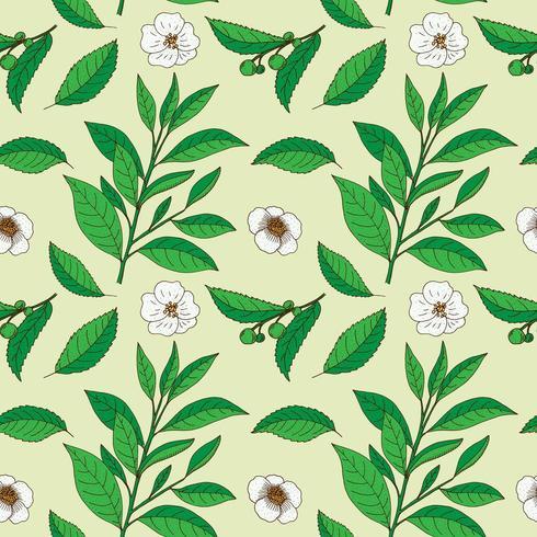 Tea Tree leaves and flowers. Hand drawn vintage seamless pattern.