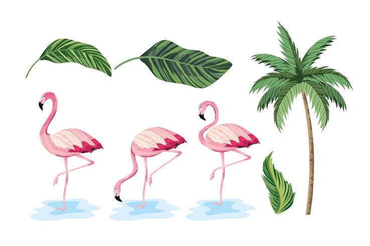 impostare foglie esotiche e palme tropicali