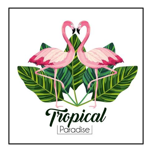 tropical flamingos couple with leaves plants