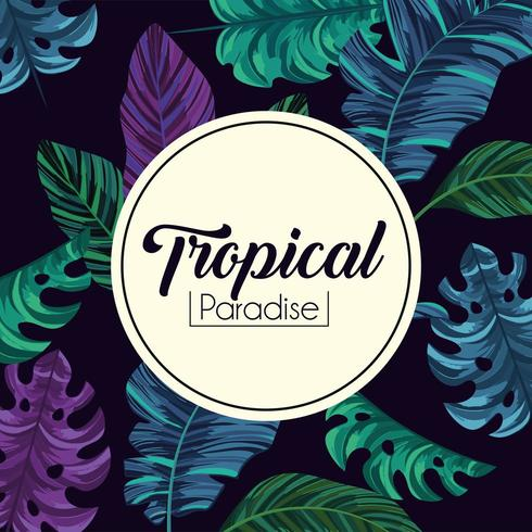 tropical label and exotic leaves plants background vector