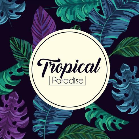 etiqueta tropical y fondo de plantas de hojas exóticas vector