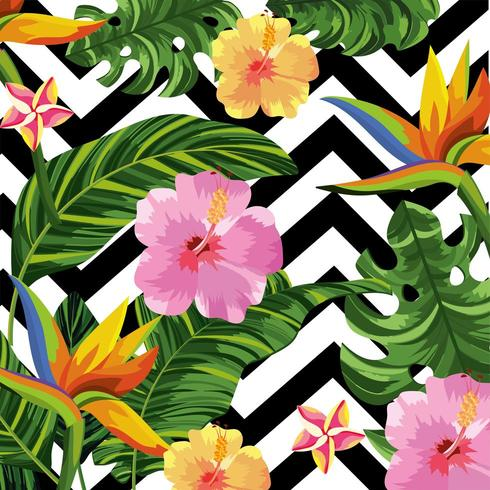 Tropical flowers on geometric background  vector