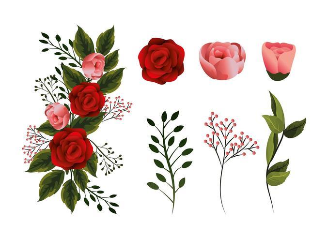 impostare piante di fiori di bellezza con petali e foglie vettore
