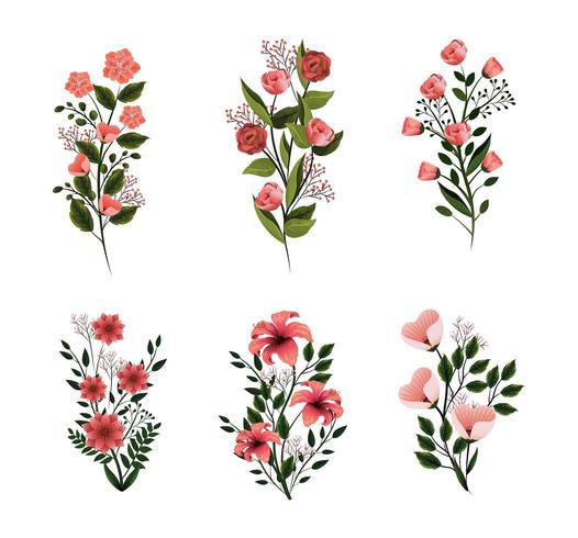 Set Natur Blumen Pflanzen mit Blütenblättern und Blättern vektor
