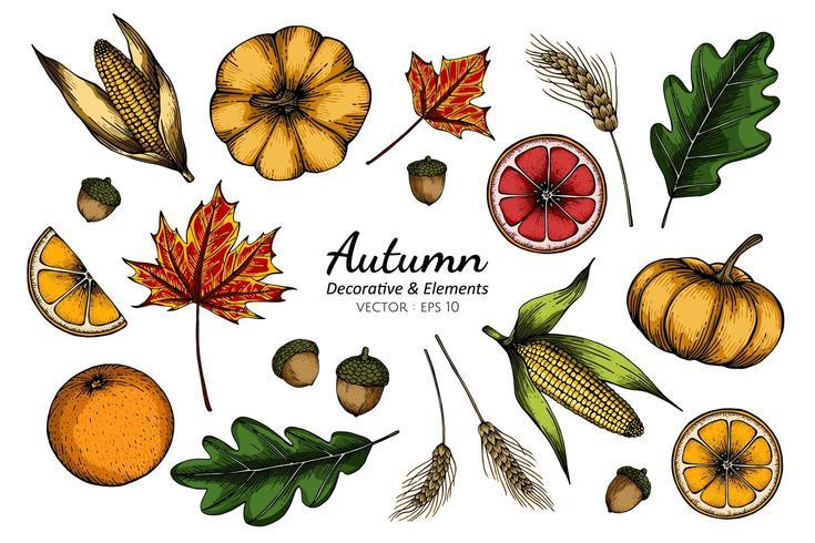 Insieme della raccolta del disegno del fiore e delle foglie di autunno