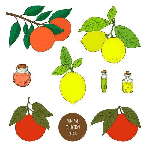 Citrus. Lemon. Orange. Grapefruit