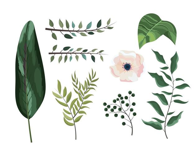set exotic branches leaves plants and flower vector
