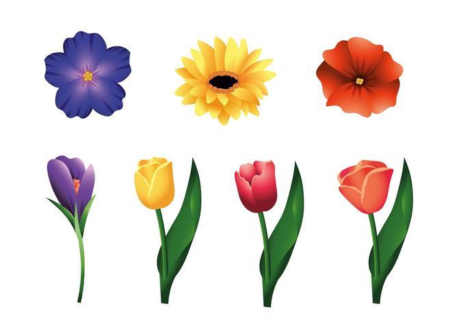 impostare fiori e rose piante con foglie vettore