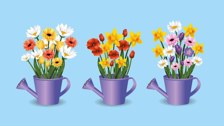 set exotic roses and flowers plants inside watering can vector
