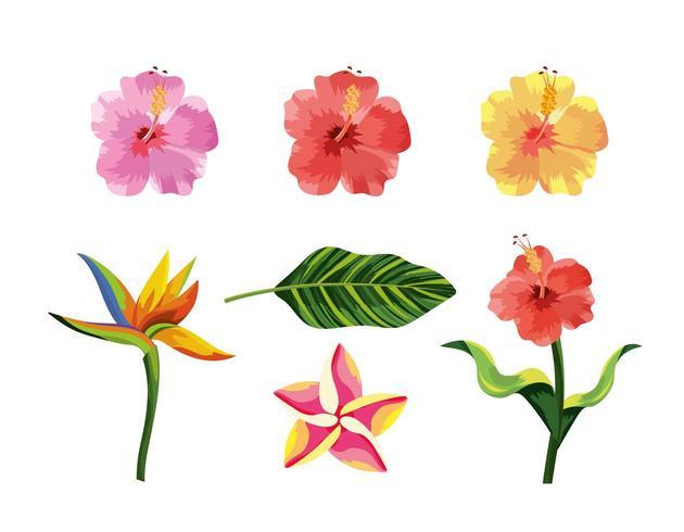 impostare piante di fiori tropicali e foglie esotiche