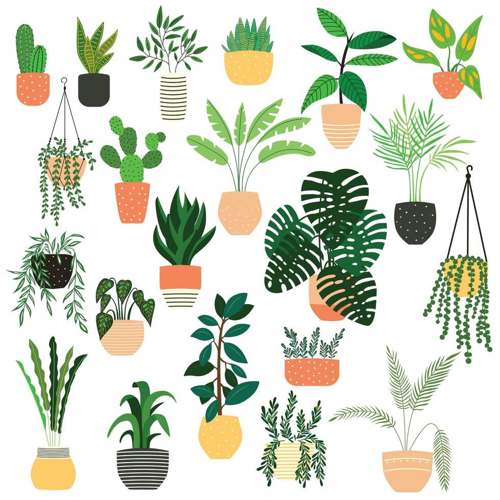 Collection of hand drawn indoor house plants on white vector