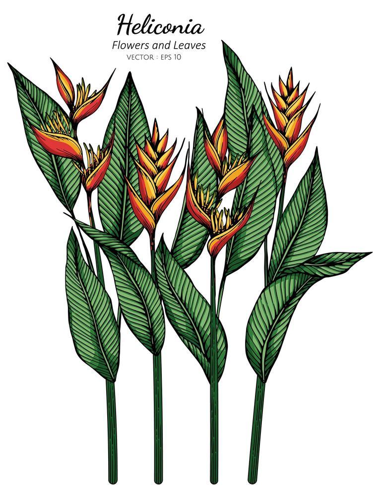 dibujo de flores y hojas de heliconia vector