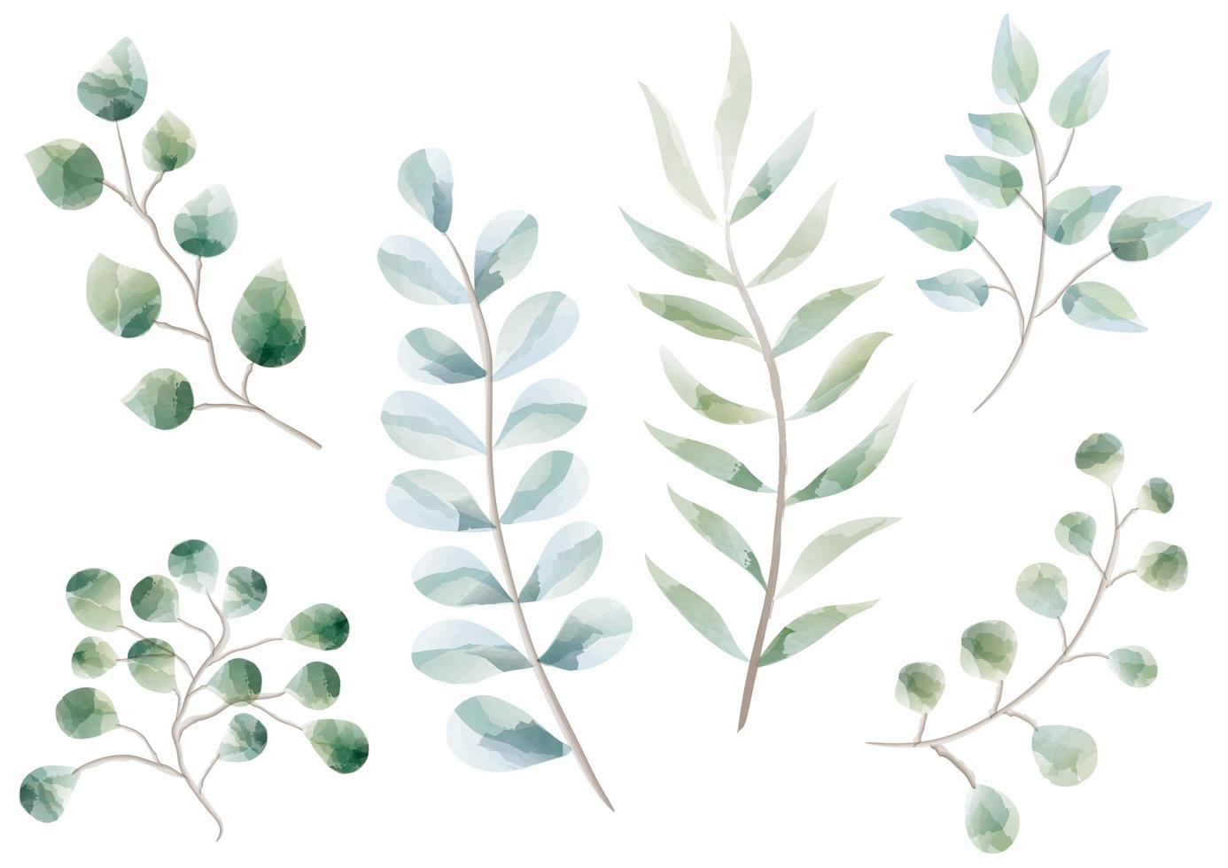 Set of Plants and Herbs in Watercolor Design vector