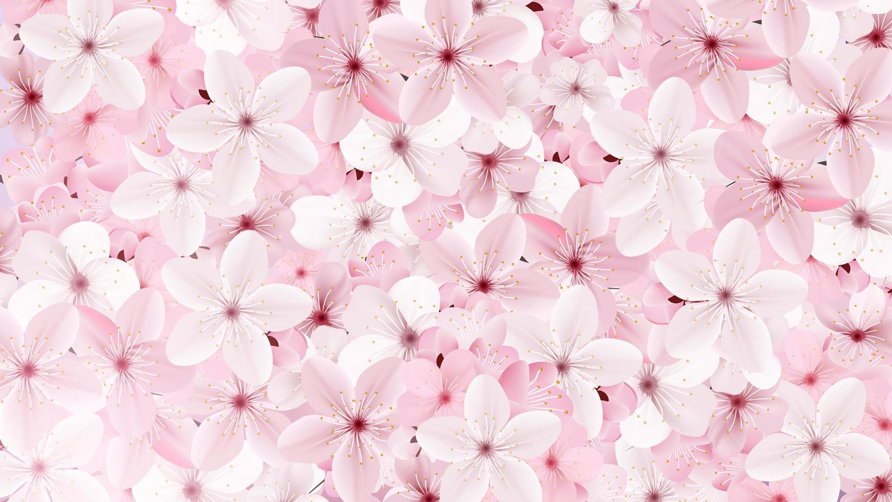 Blossoming pink sakura flowers background vector