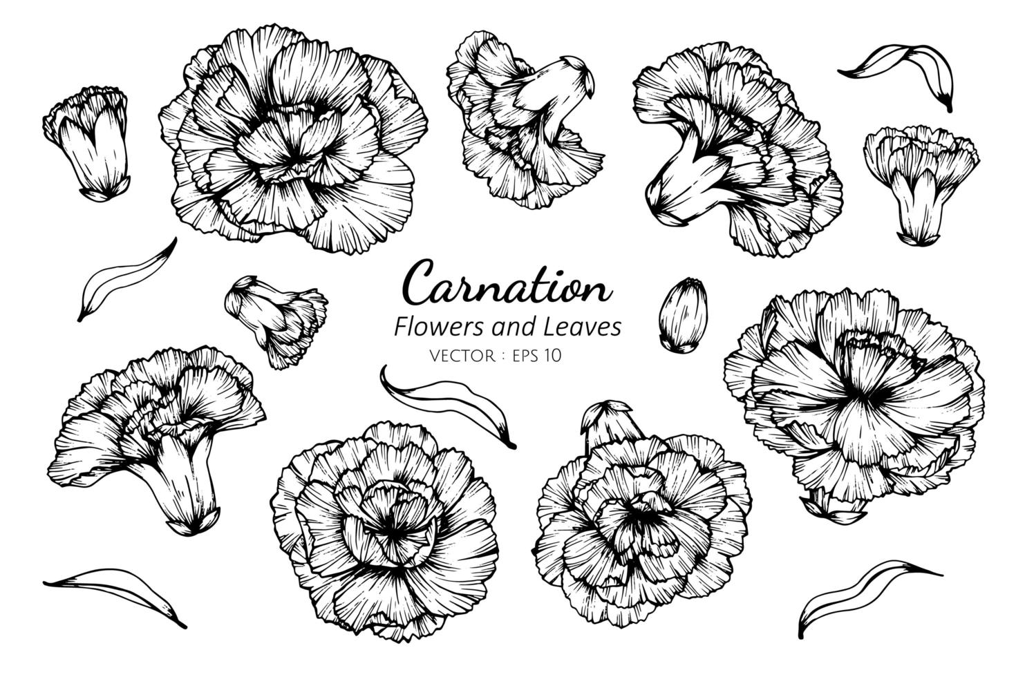 Collection of Carnation Flowers and Leaves  vector