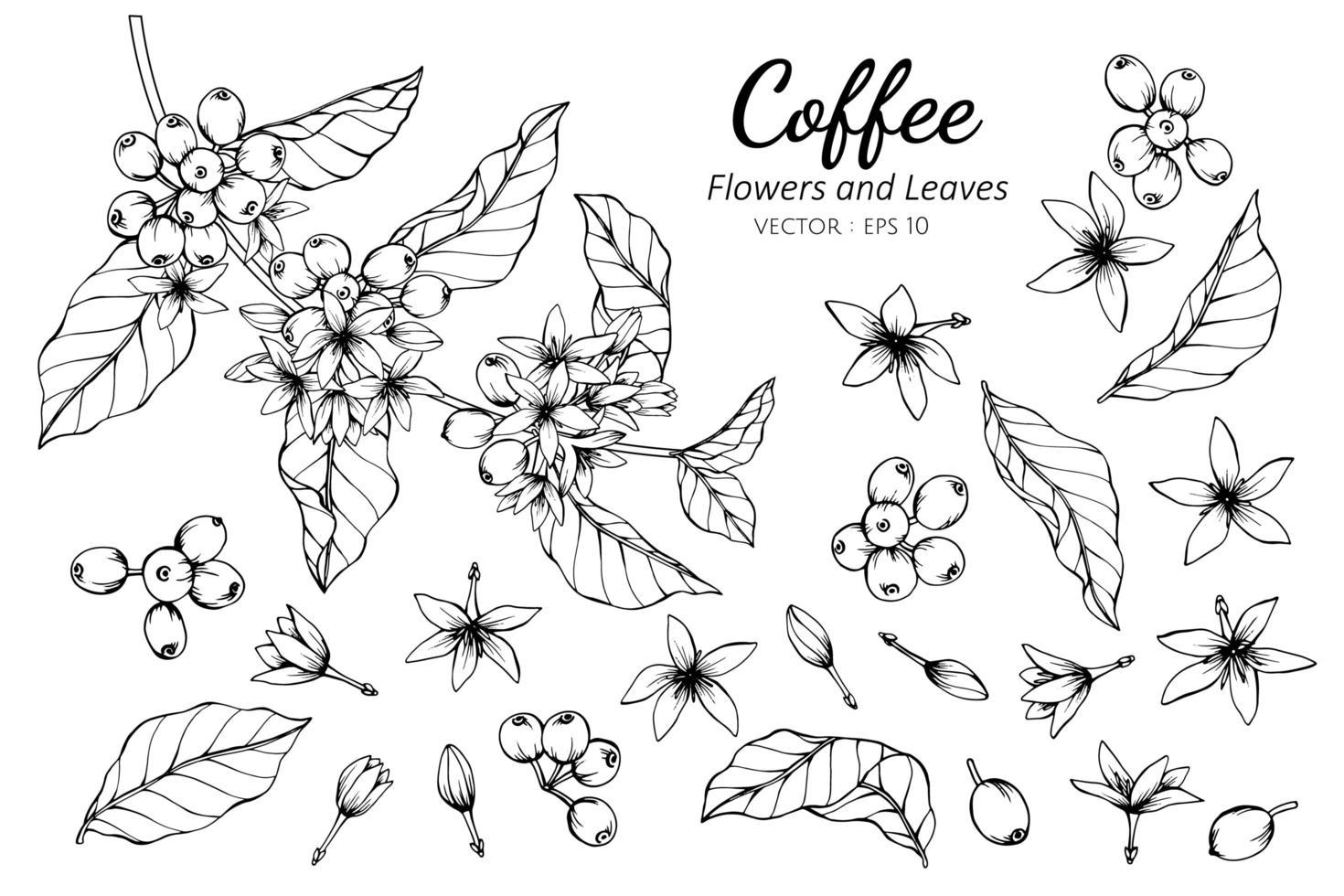 colección de flores y hojas de café vector
