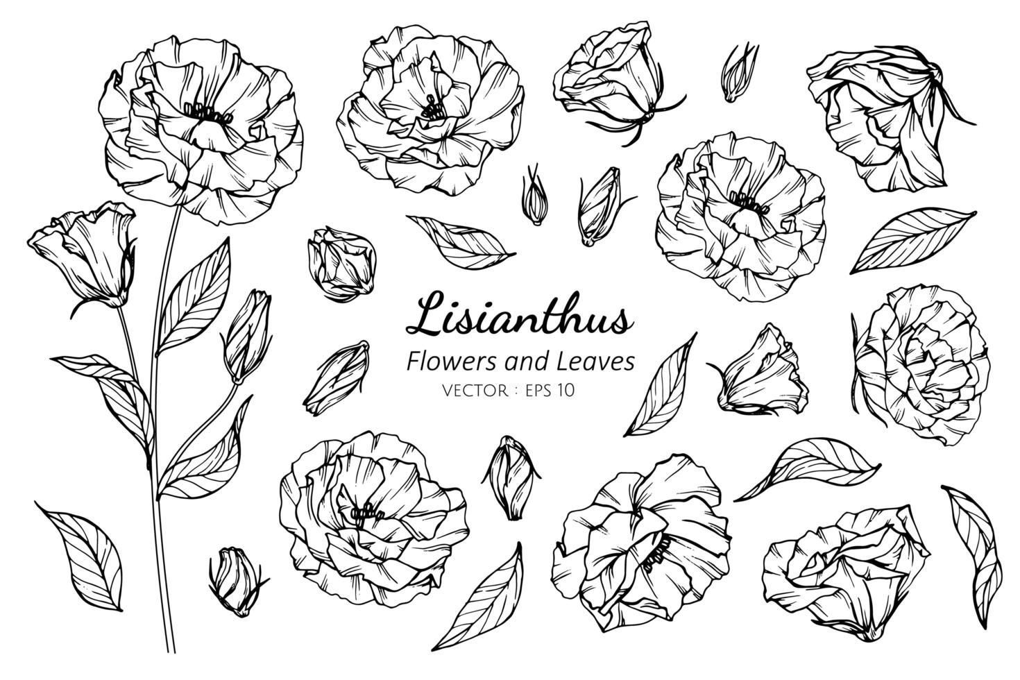 Collection of Lisianthus flower and leaves vector