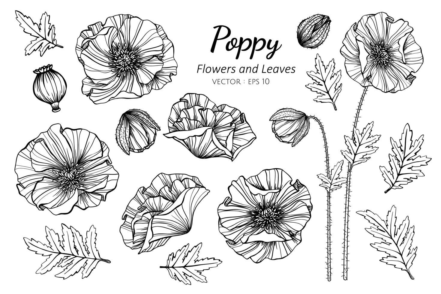 Collection of Poppy flowers and leaves vector