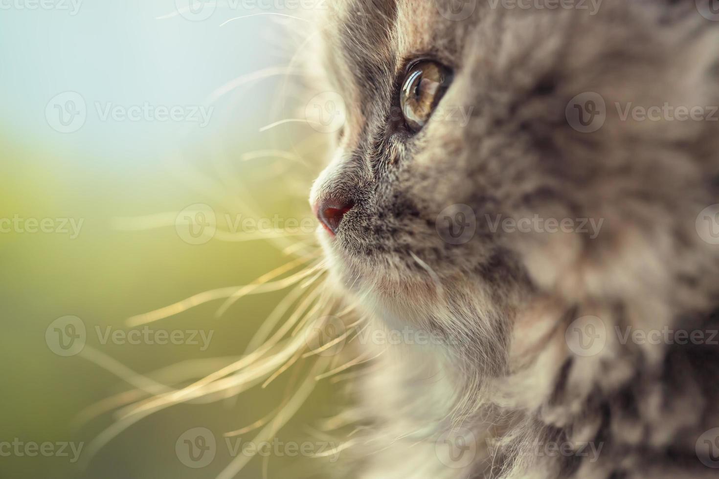 Portrait of adorable little cat defocused photo