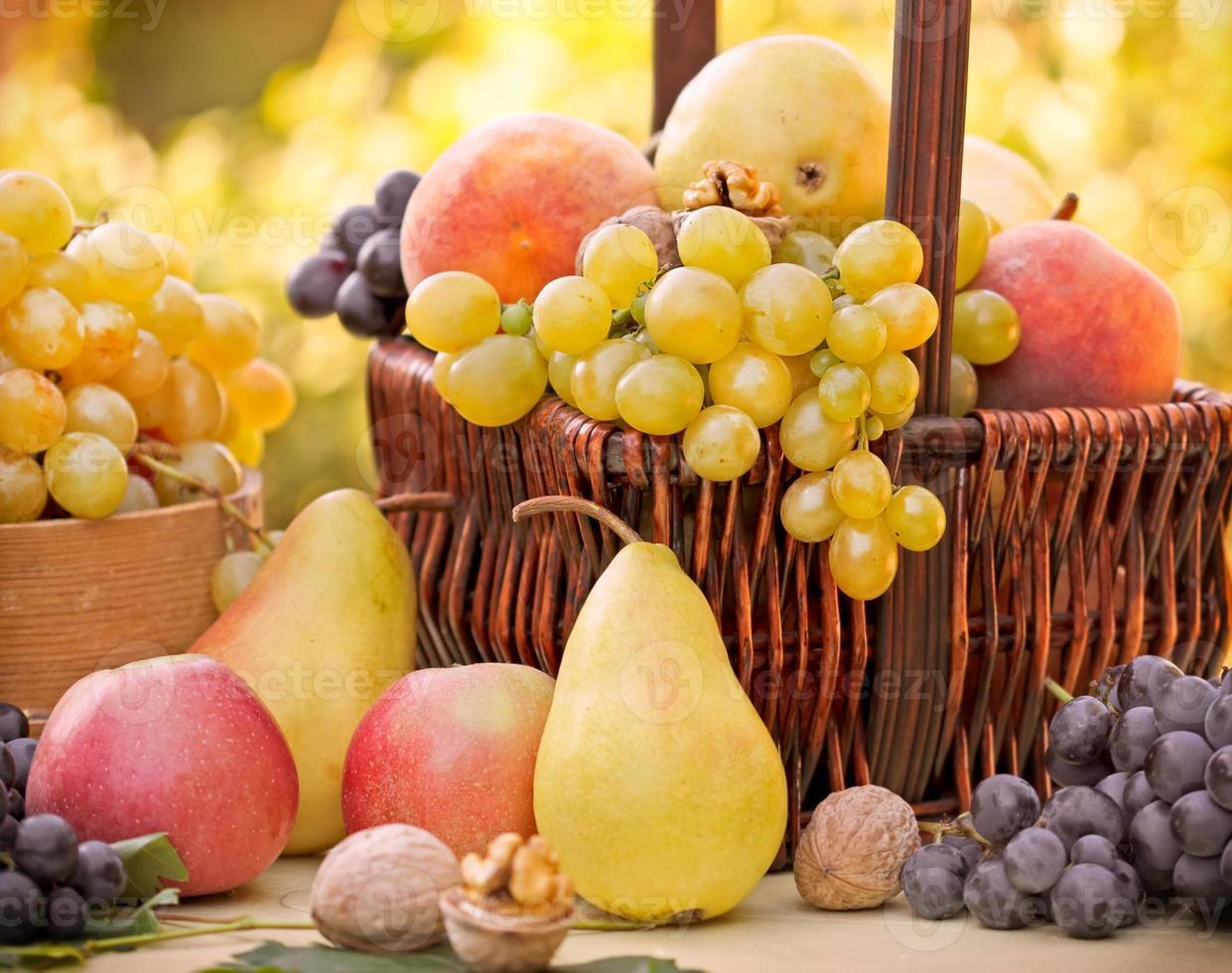Autumn fruits - organic fruits photo