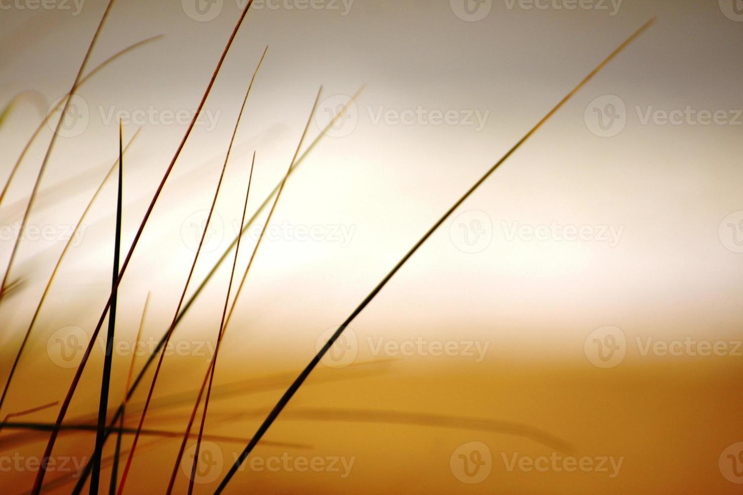 hierba de playa foto