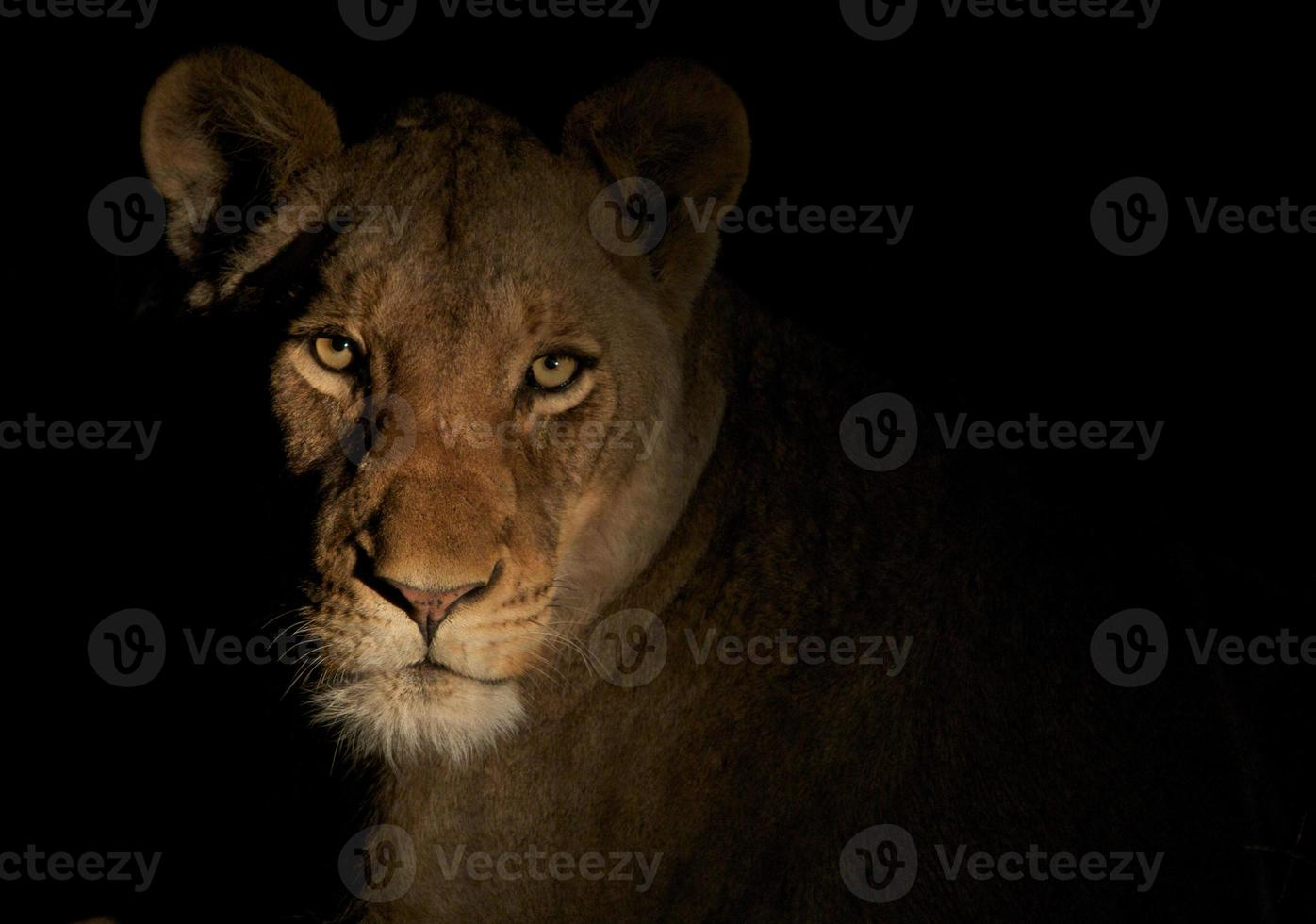 leona de la noche foto