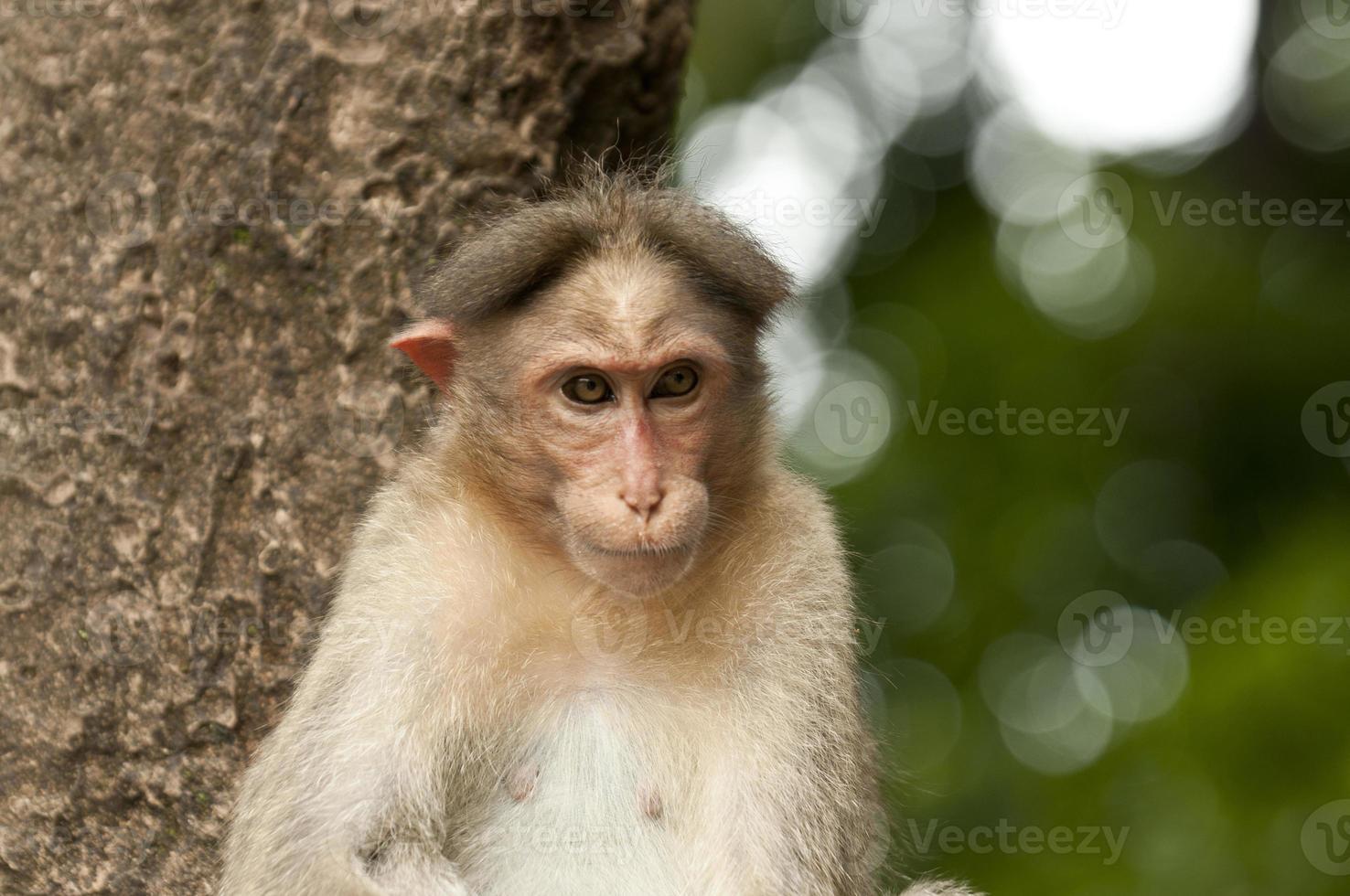 Cute monkey on tree photo