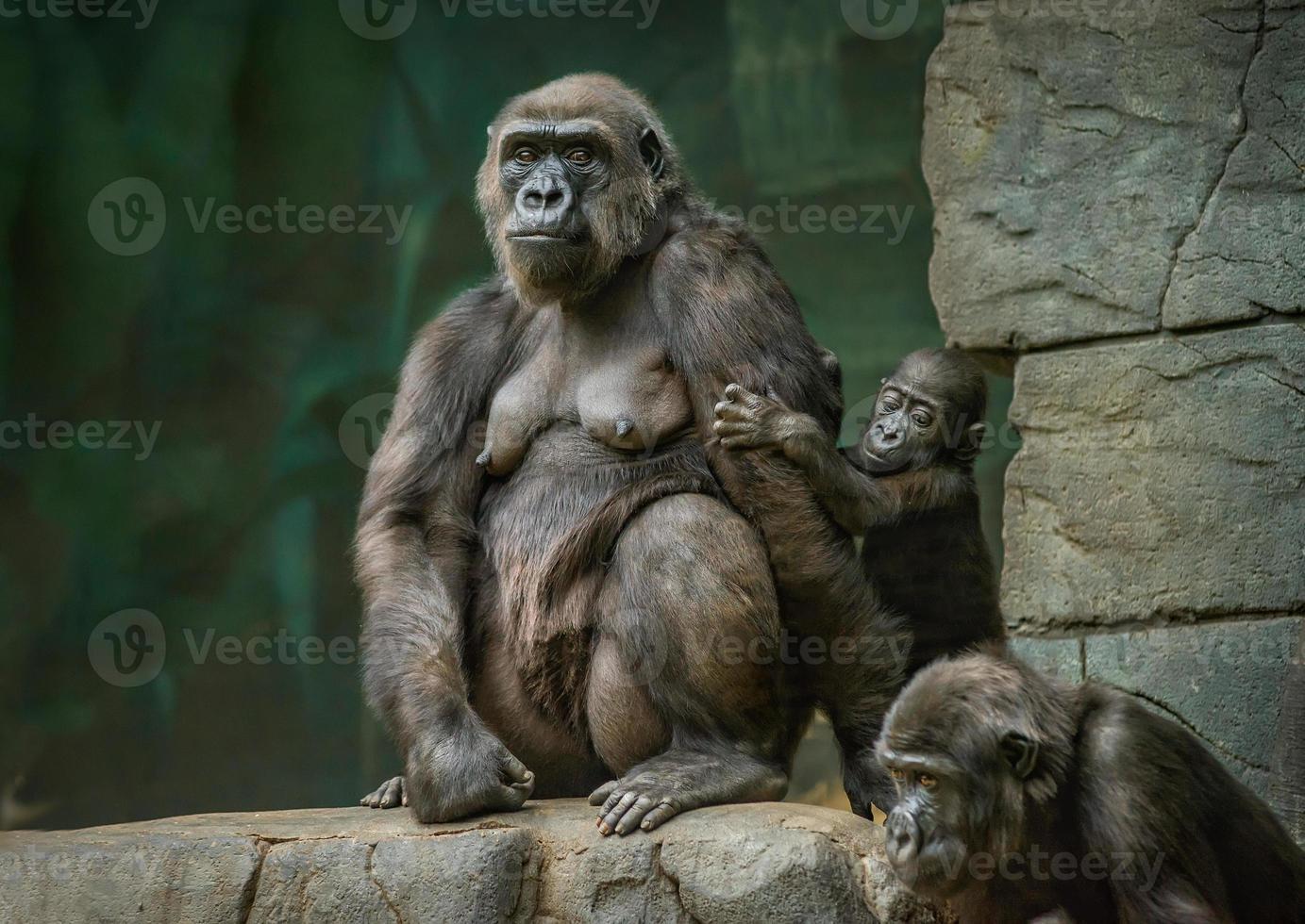 familia foto