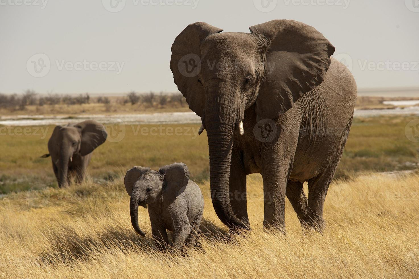 Elephant mother with baby, Okerfontein waterhole, Etosha Nationa photo