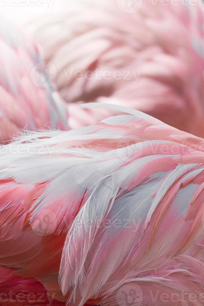 flamencos rosados contra el fondo borroso foto