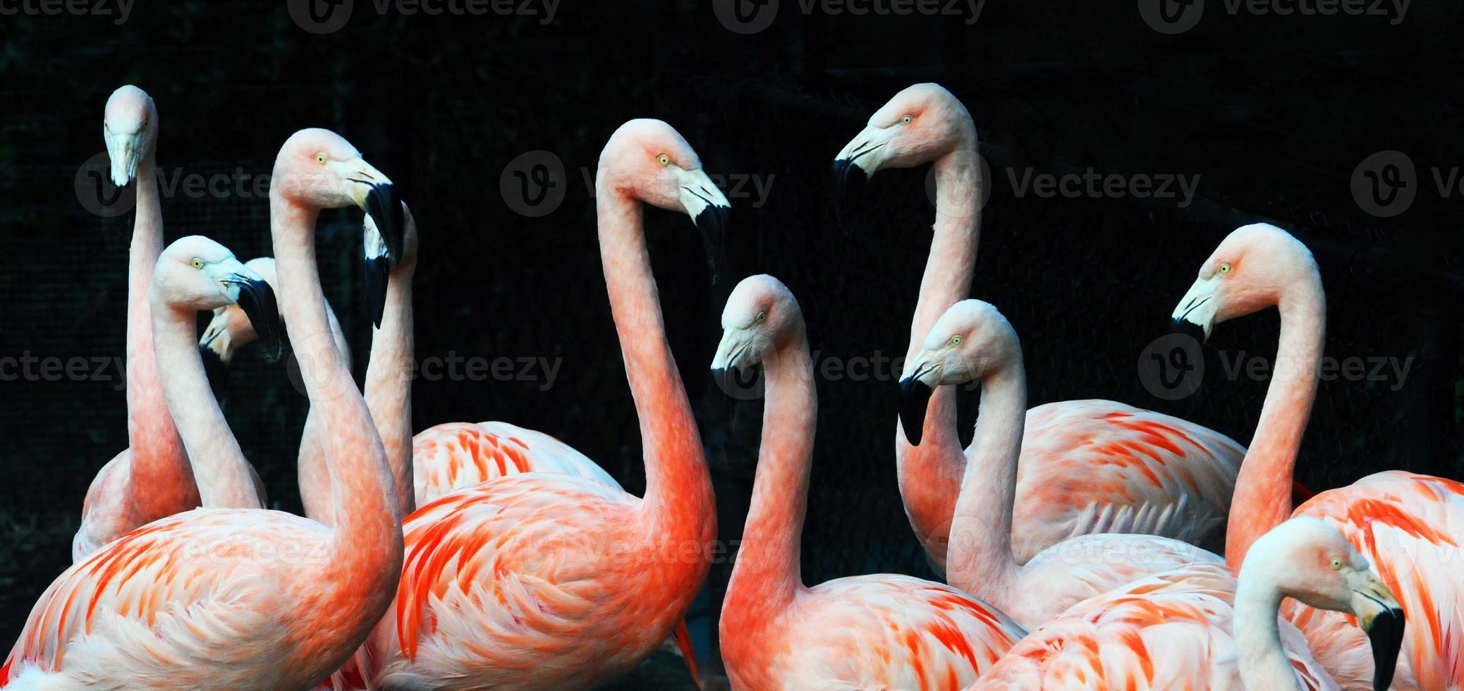 grupo de flamencos foto