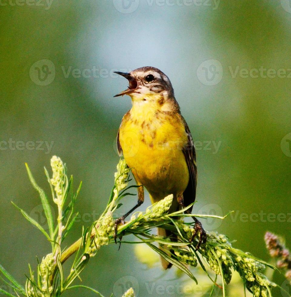 pájaros empinados foto