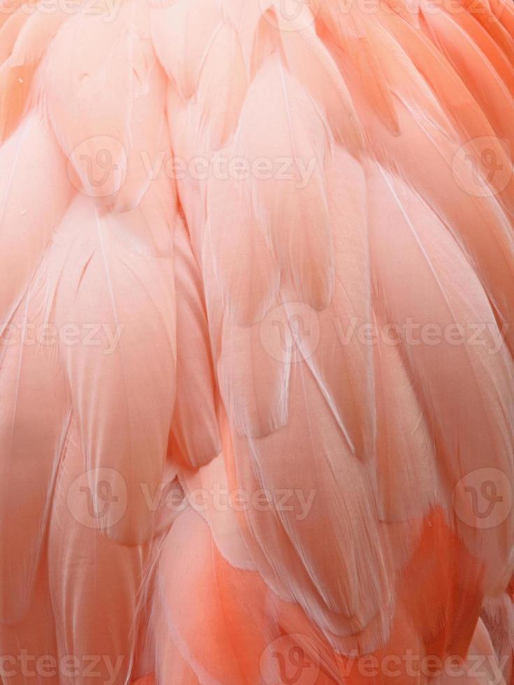 fond de flamant rose photo
