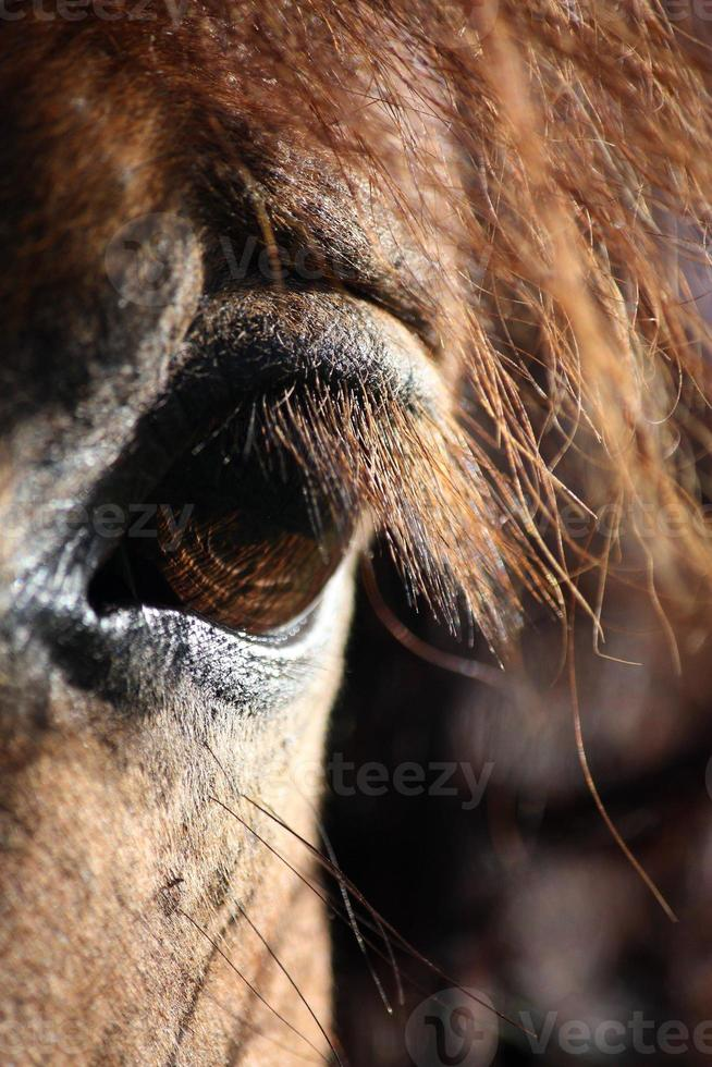 Brown horse eye and mane close up photo
