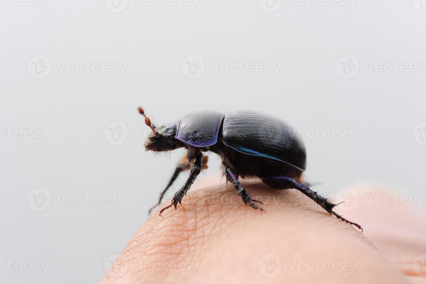 escarabajo de cerca foto