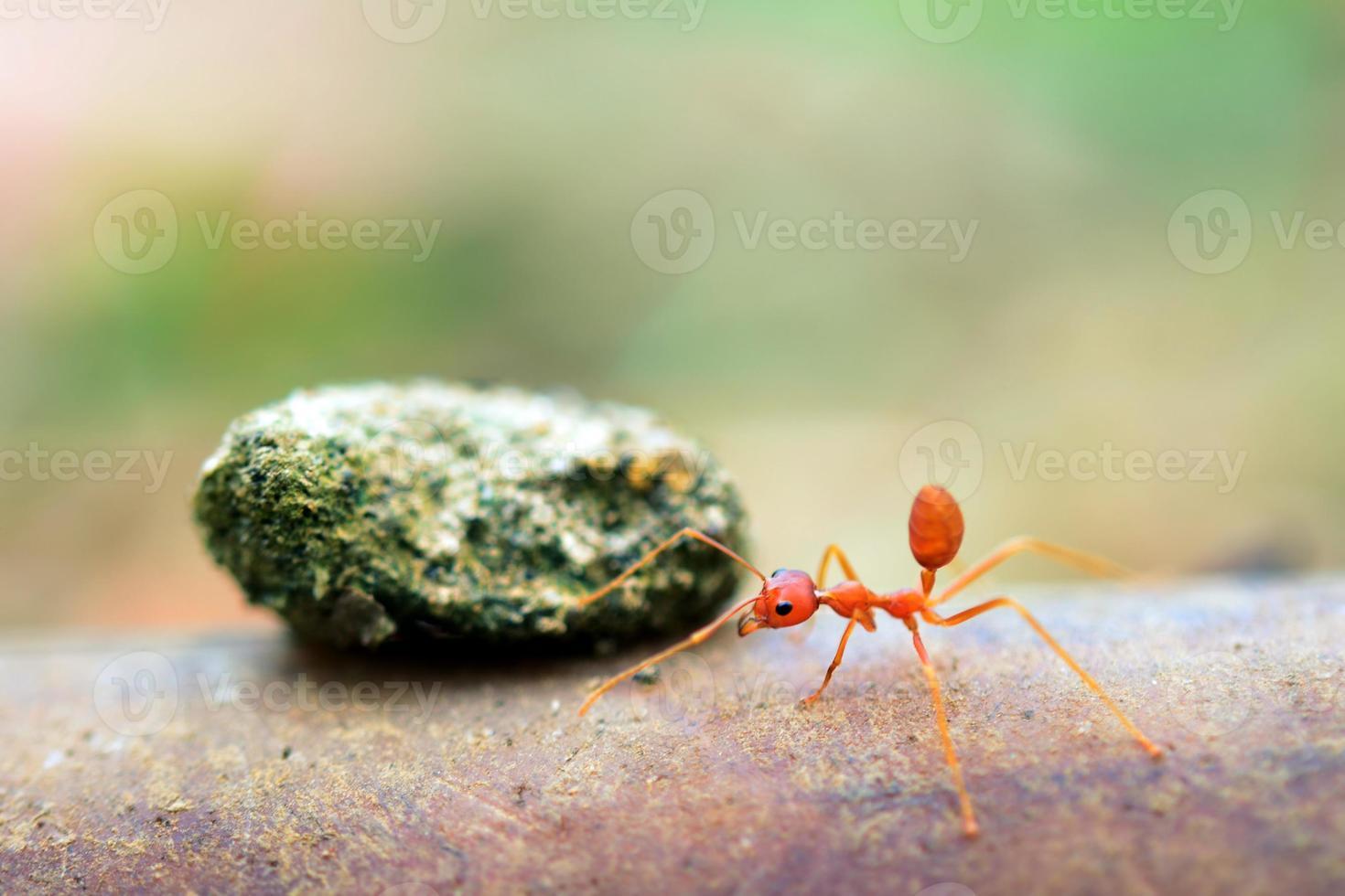 Ant tiny world (Macro, selective focus environment on leaf background) photo
