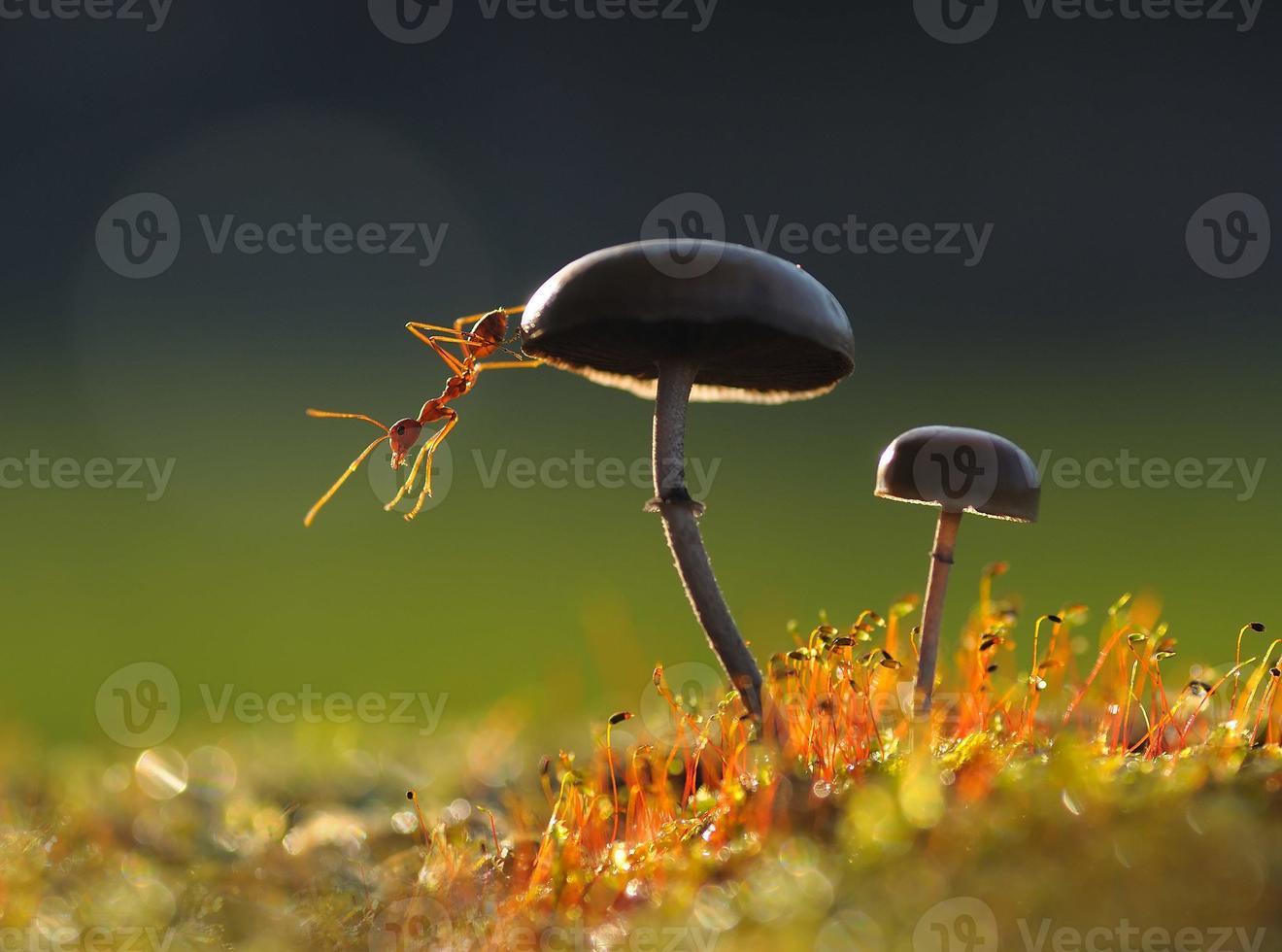 fourmi sur un champignon photo