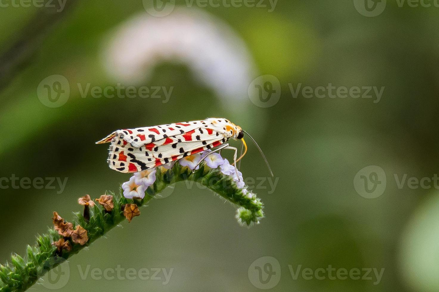 Colorfull moth photo