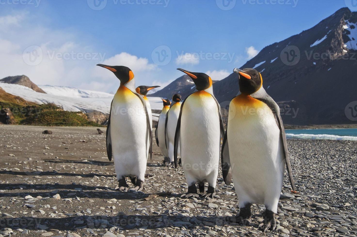 paraíso de los pingüinos foto