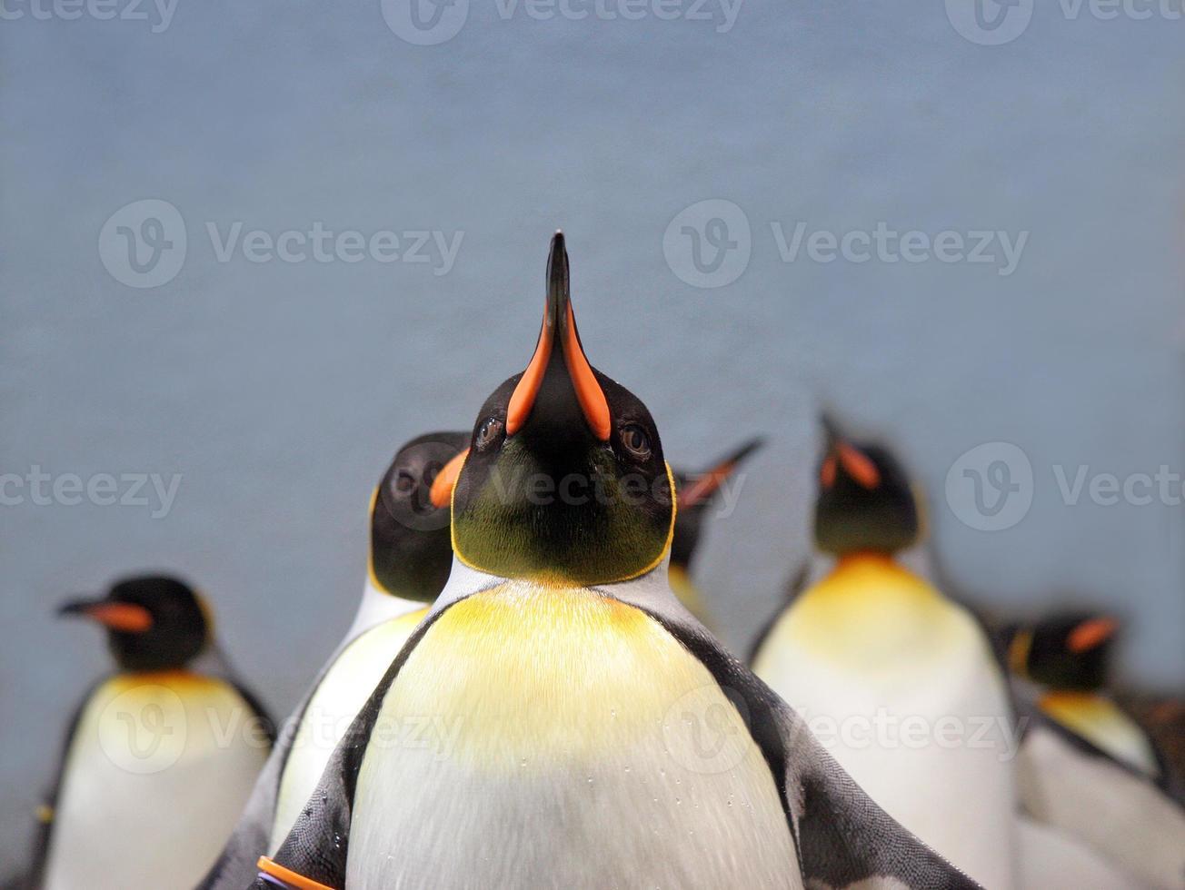 pingüinos foto