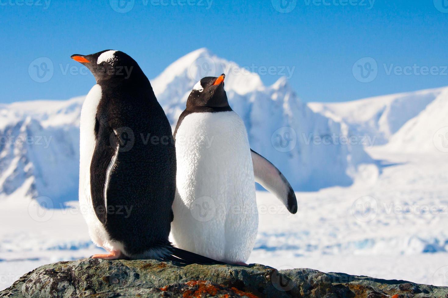 dos pingüinos soñando foto