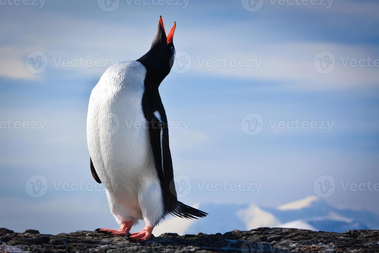 penguin on the rocks photo