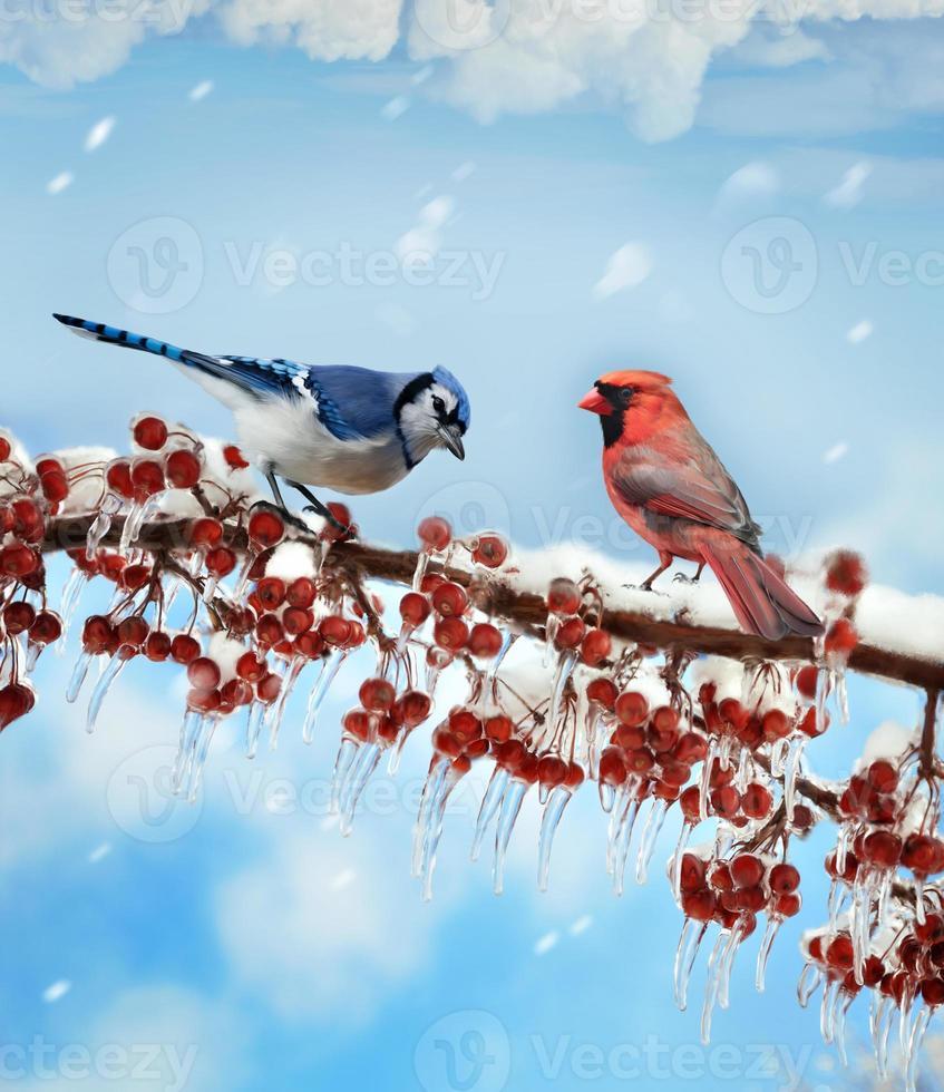 pájaros en invierno foto