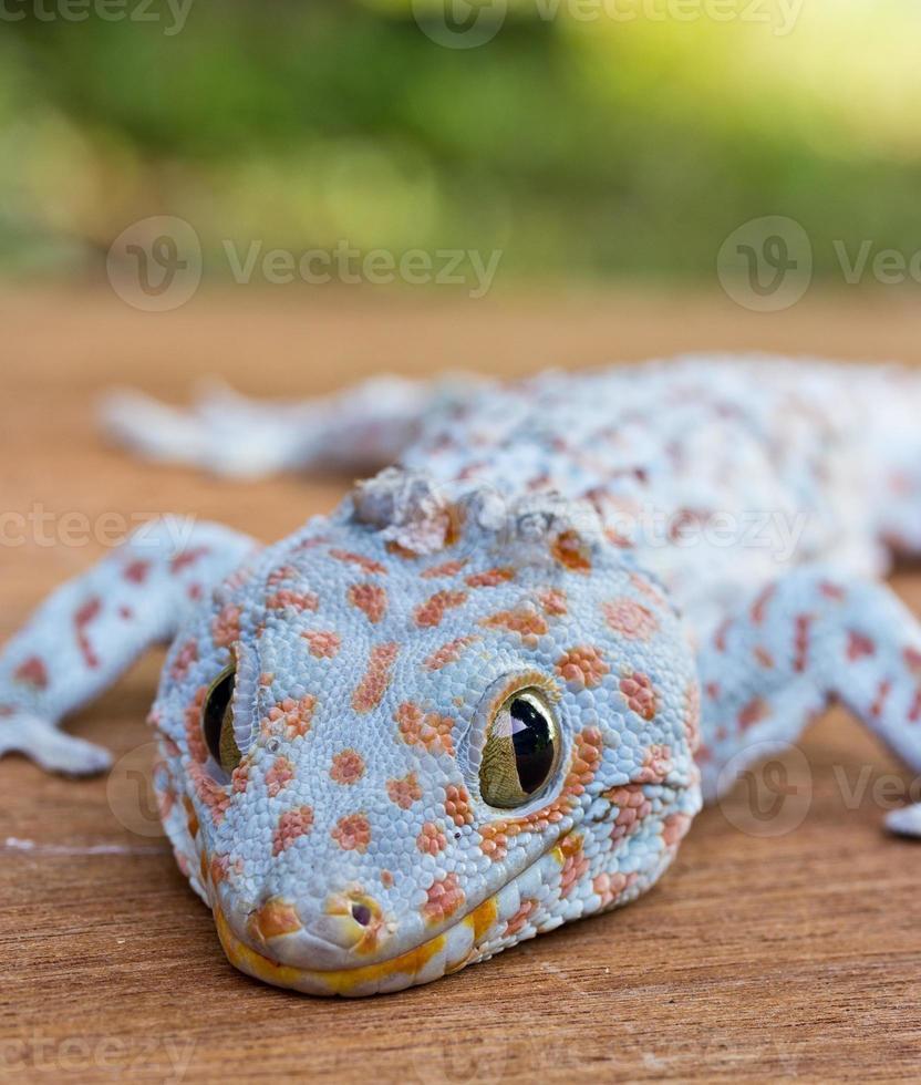 close-up van gekko op de houten muur foto