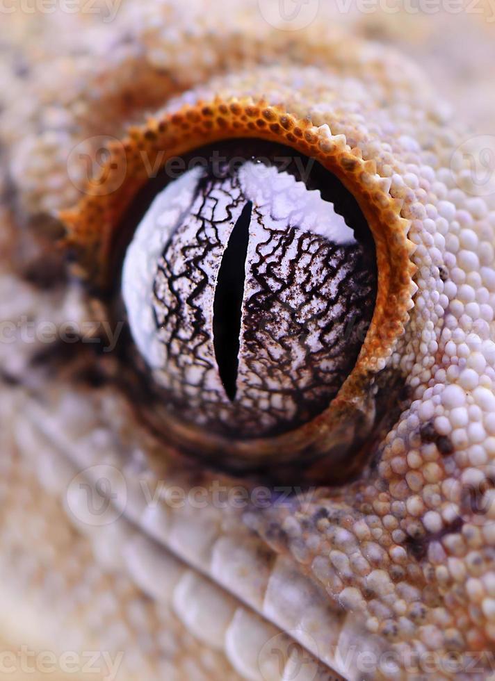reptil geco crestado foto