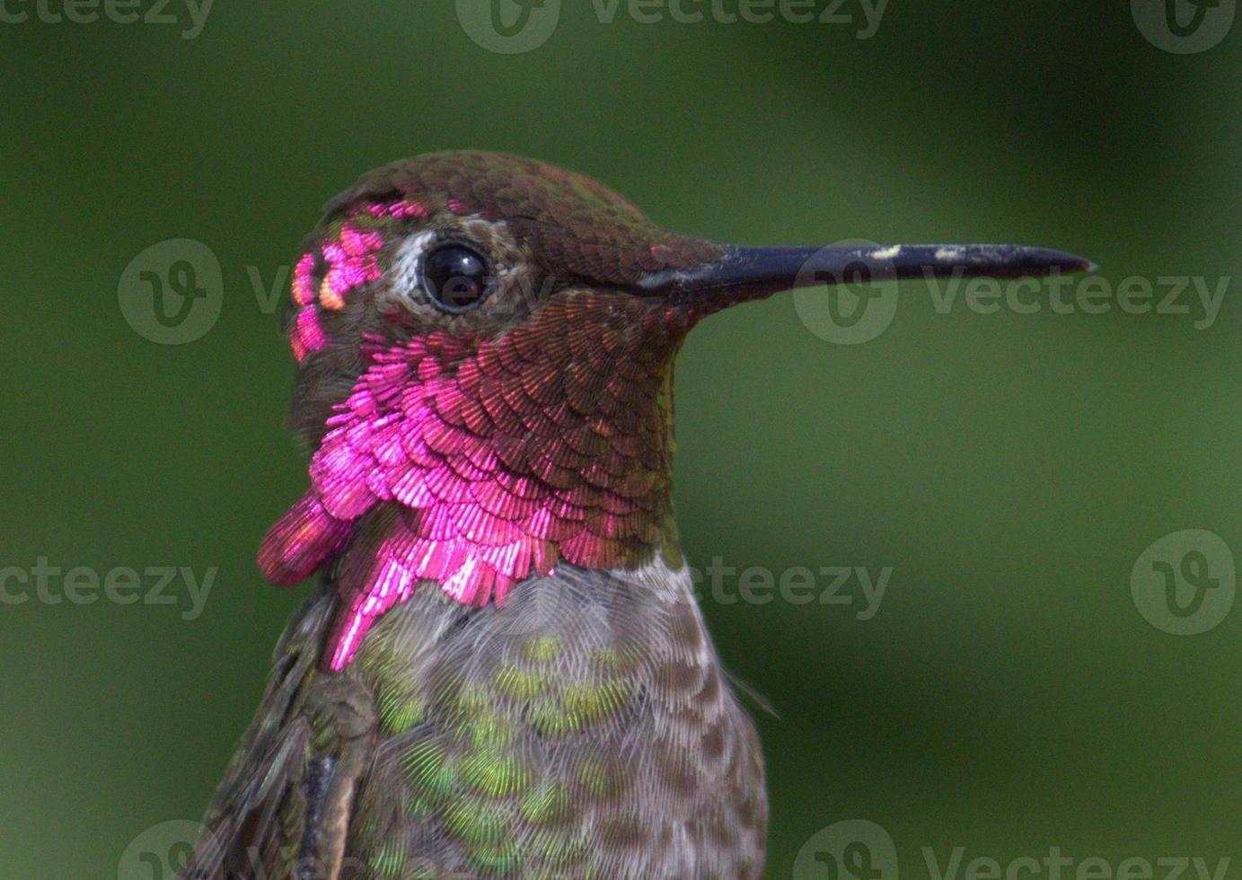colibrí foto