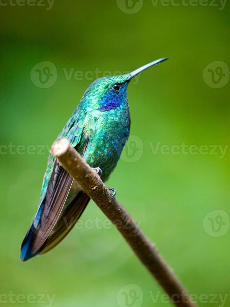 el verde violetear foto