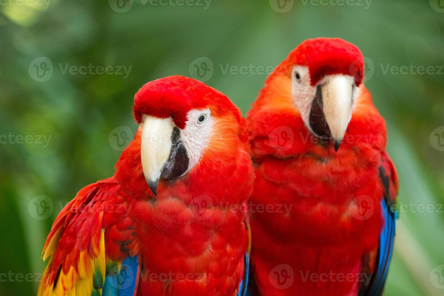 pájaro loro foto