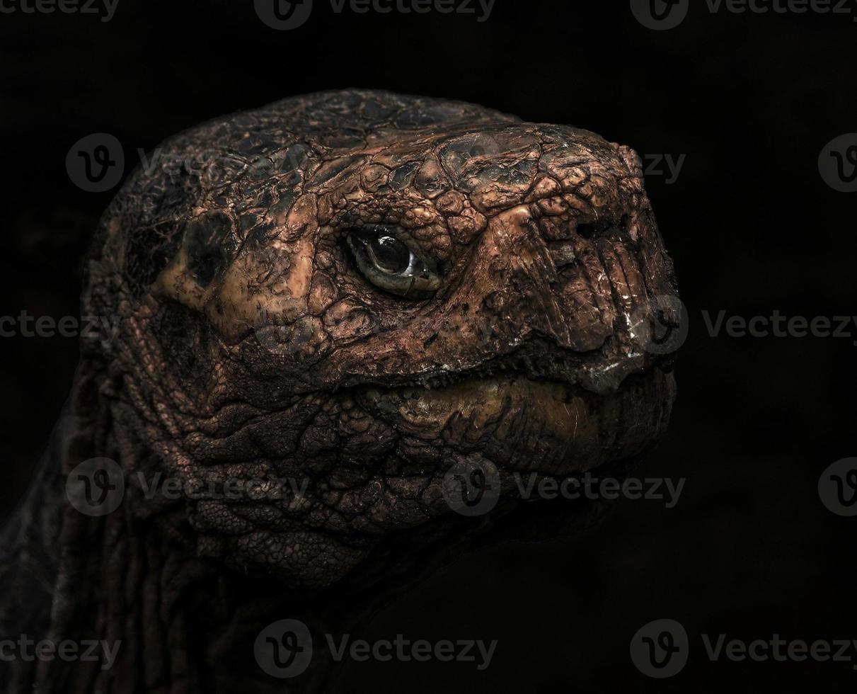 tortue géante des Galapagos photo